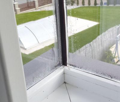 Rosia sa mi okná