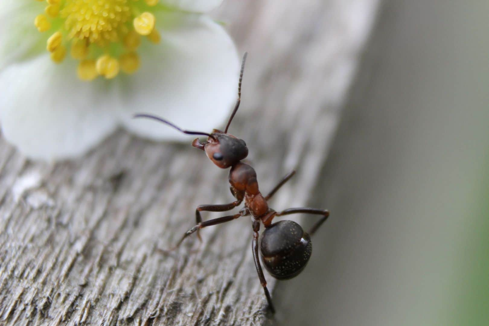 Mravce v dome