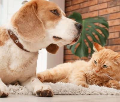 Podlahy, vhodné aj pre domácich miláčikov, pes-macka-koberec