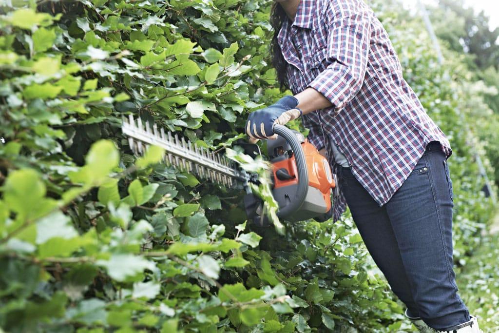 V lete si živé ploty vyžadujú ozdravnú kúru Husqvarna plotostrih