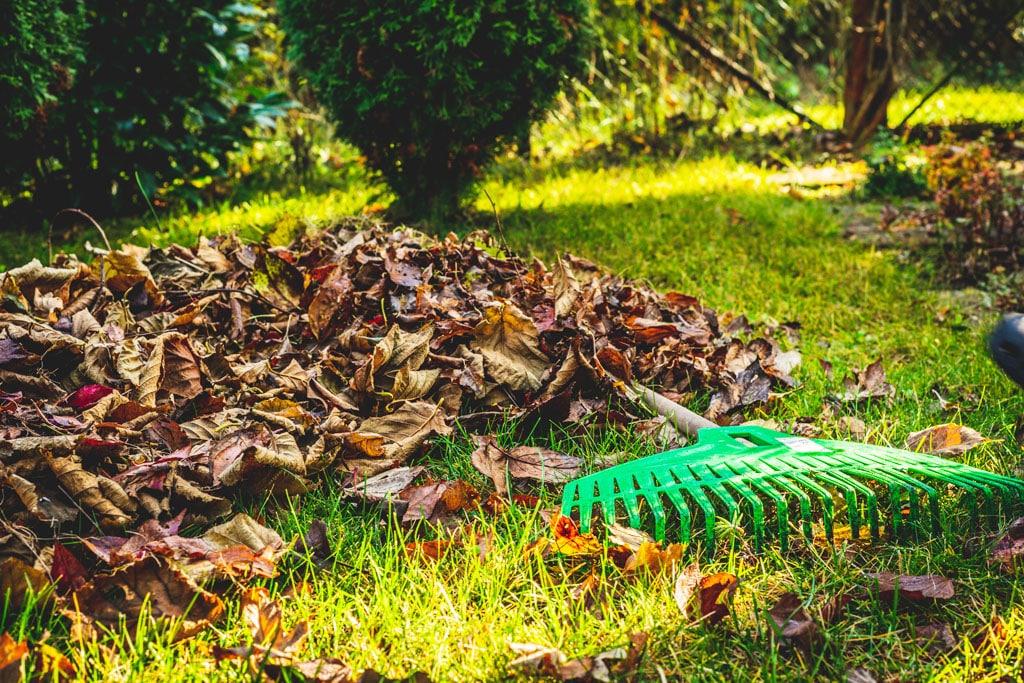 Prvé chladné novembrové dni sú plné spomienok na zosnulých a príprav vašej záhrady na zimu