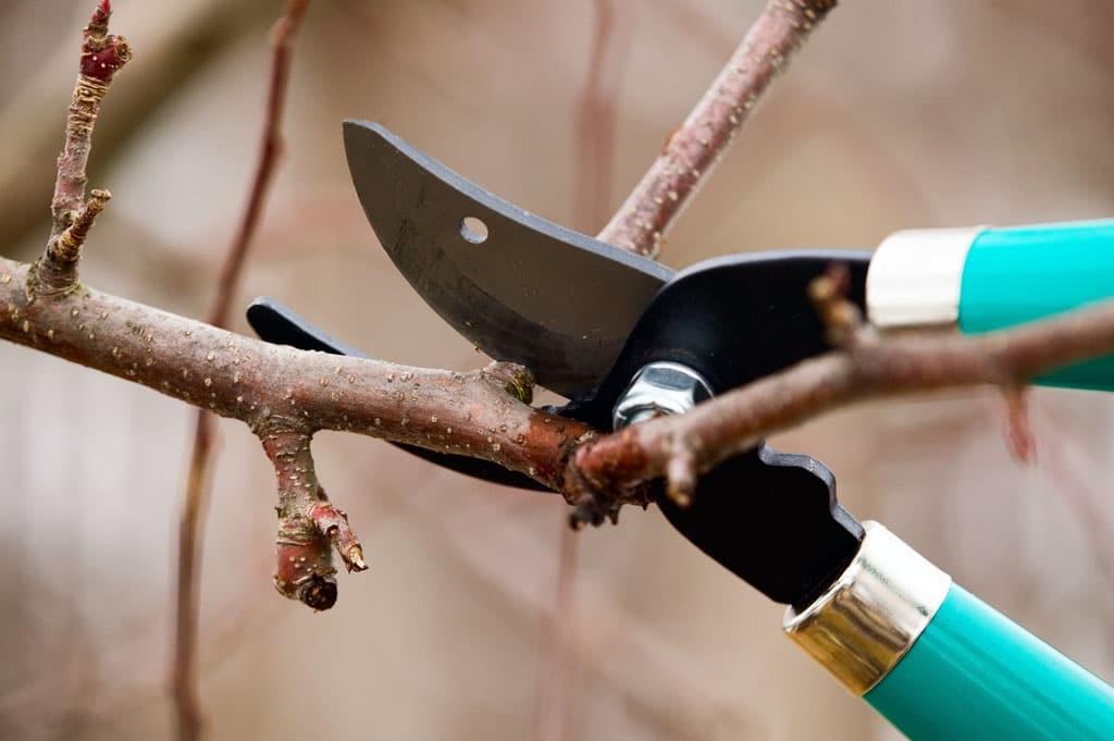 Vytvorte si zásoby na jarné zaštepovanie, Prvé chladné novembrové dni sú plné spomienok na zosnulých a príprav vašej záhrady na zimu