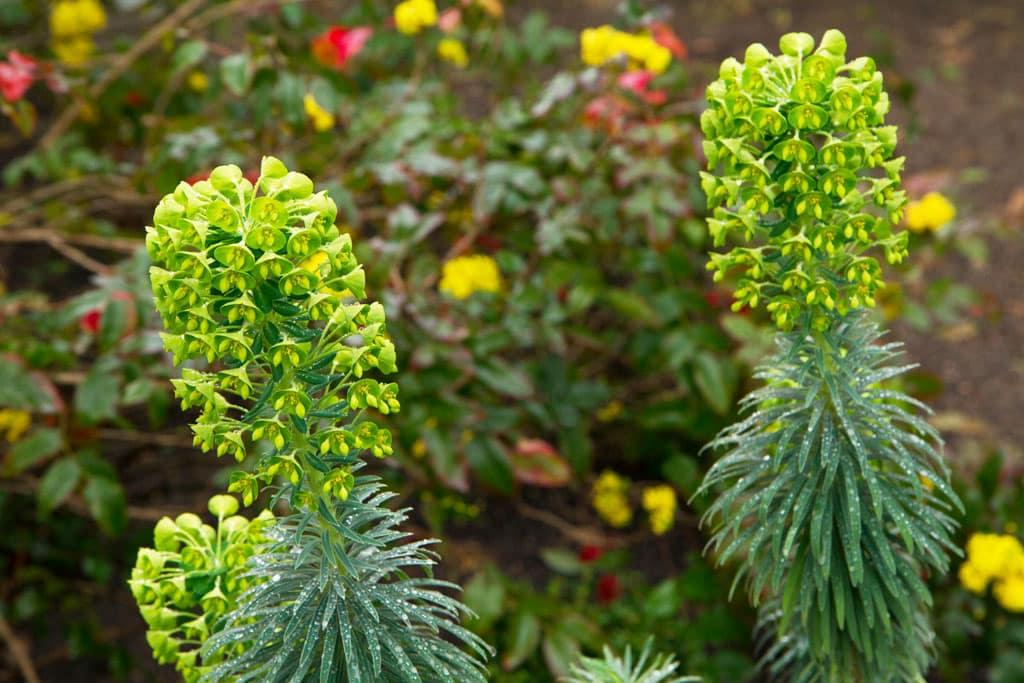 Zvláštnu pozornosť venujte exotickým rastlinám