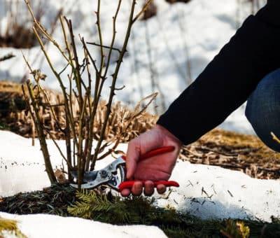Vaša záhrada potrebuje starostlivosť aj cez zimu. Ako na zimnú údržbu