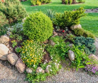 Poradíme vám ako skalka dokáže skrášliť záhradku či dvor