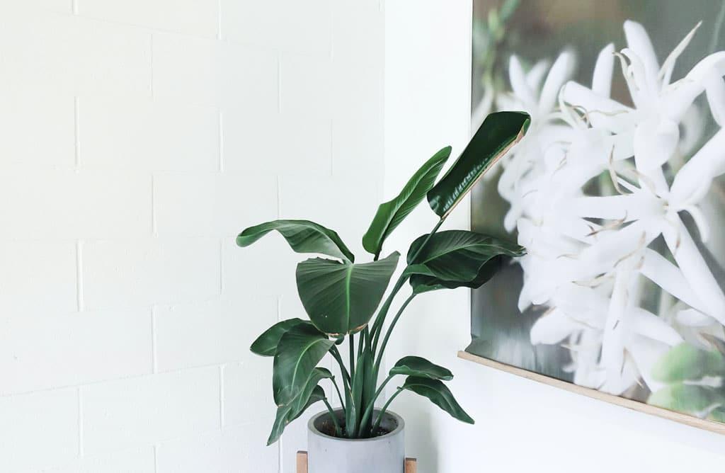 Starostlivosť o izbové rastliny v zimnom období nie je náročná