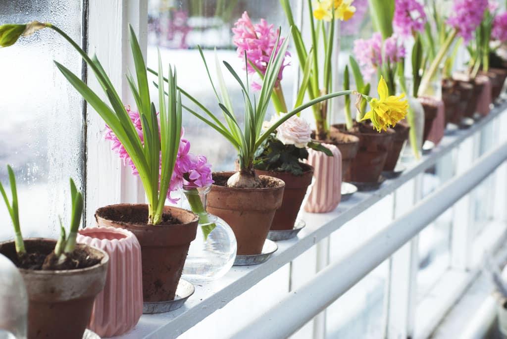 Naplánujte si novú sezónu, príprava kvetináčov s hlinou na letničky