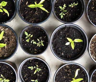 Niečo pre záhradkárov Využite zimu a pripravte svoju záhradku sa na jar, Naplánujte si novú sezónu, príprava kvetináčov s hlinou na letničky