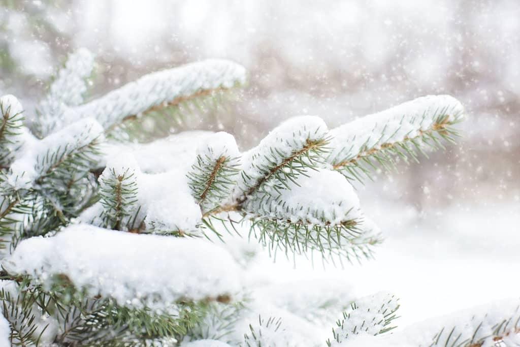 Niečo pre záhradkárov Využite zimu a pripravte svoju záhradku sa na jar , sneh by ste nemali odhŕňať spod stromov