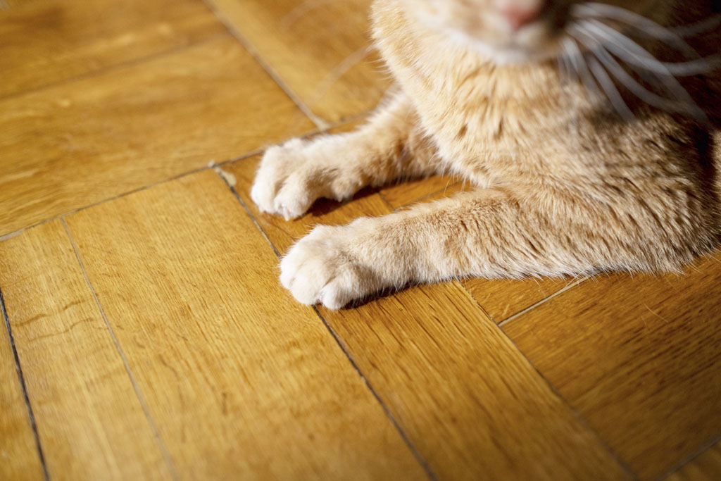 Drevená podlaha je štýlová investícia
