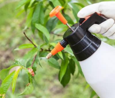 Jarné ošetrenie ovocných stromov Ako na to, čím postrekovať, zahrada postrek stromov
