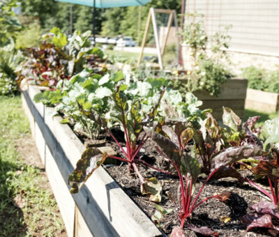 Postavte si vyvýšené záhony pre vašu záhradku