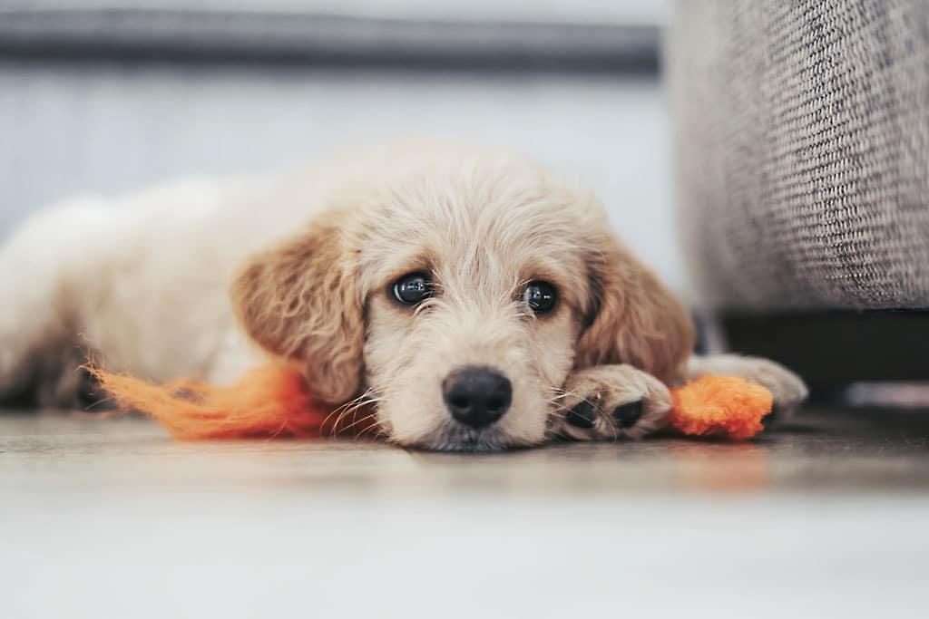 Domáci miláčik v byte Pripravte váš domov na príchod psa či mačky poriadne, nove zviera doma