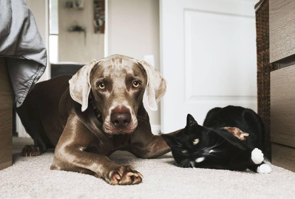 Odstráňte káble a iné nebezpečné predmety, Domáci miláčik v byte Pripravte váš domov na príchod psa či mačky poriadne