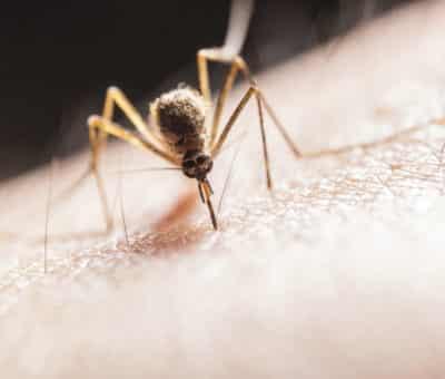Blíži sa letná sezóna a otravné komáre sú tu, Ako sa účinne zbaviť komárov