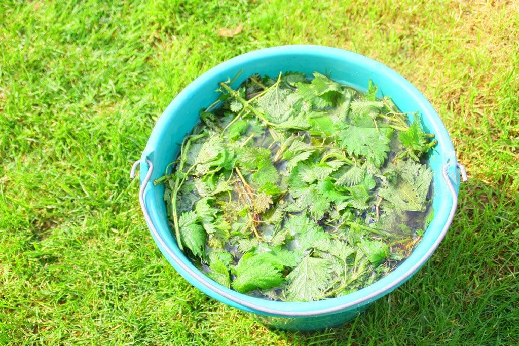Vyrobte si prírodné hnojivá bez námahy 1 časť, exterier, zahrada, hnojivo, Žihľava