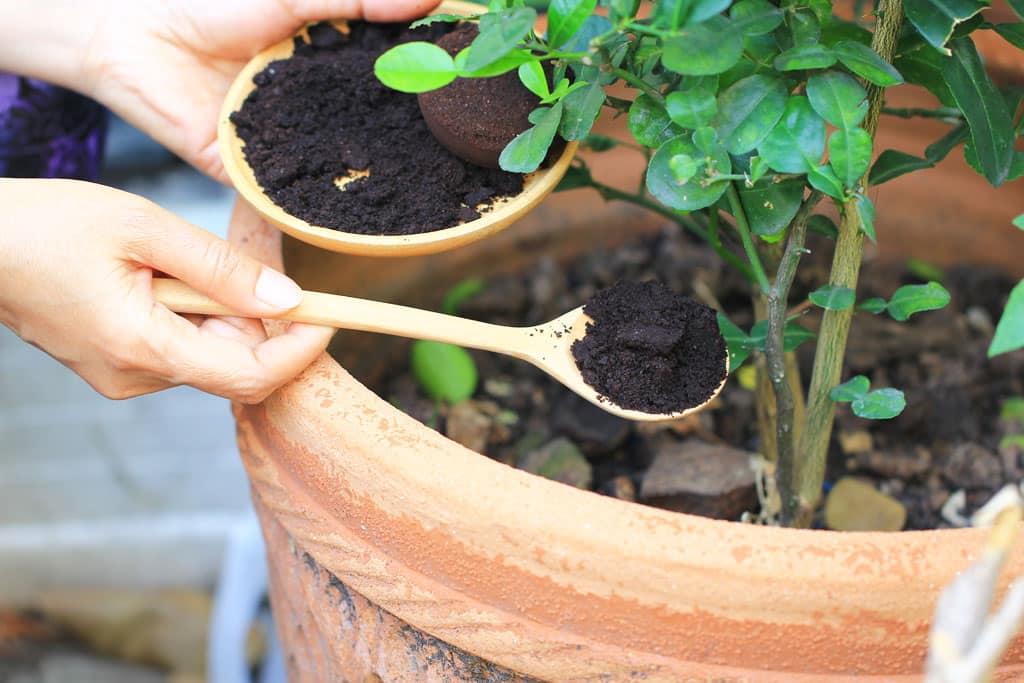 Vyrobte si prírodné hnojivá bez námahy 1 časť, exterier, zahrada, hnojivo, Usadenina z kávy